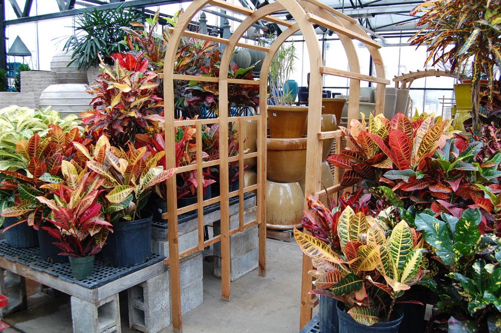 Indoor Garden Center City escape garden center chicago il indoor plants indoor plants workwithnaturefo
