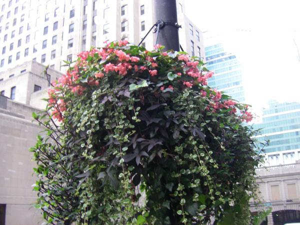 City Planting 003