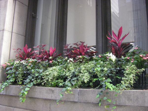 City Planting 008